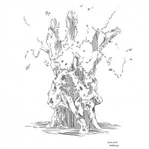 Mallorca, ink sketch of my favorite olive tree of Palma